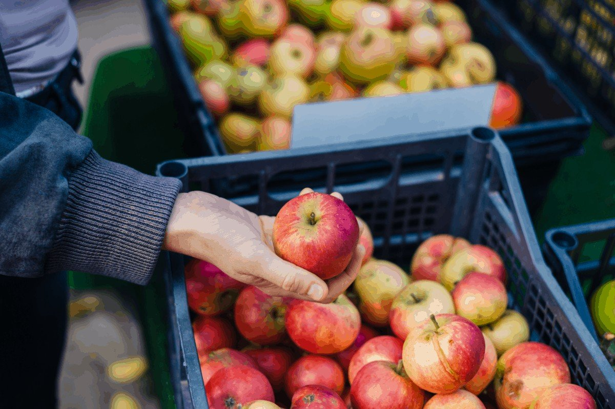 Best Apples for Apple Butter