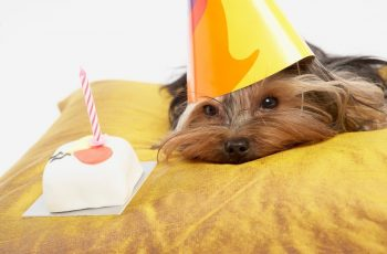Dog Birthday Cake Recipe Without Peanut Butter