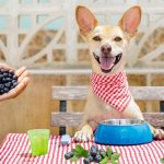 Homemade Blueberry Dog Treats Recipe