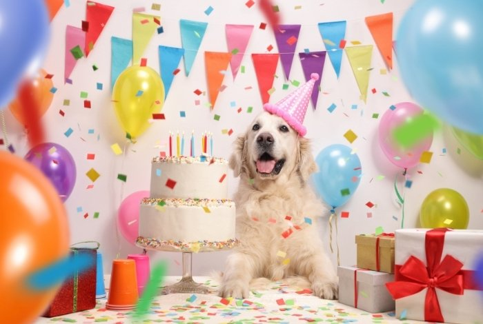 How to Accomplish the Best Dog Birthday Party