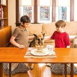 No-Bake Dog Cake Recipe