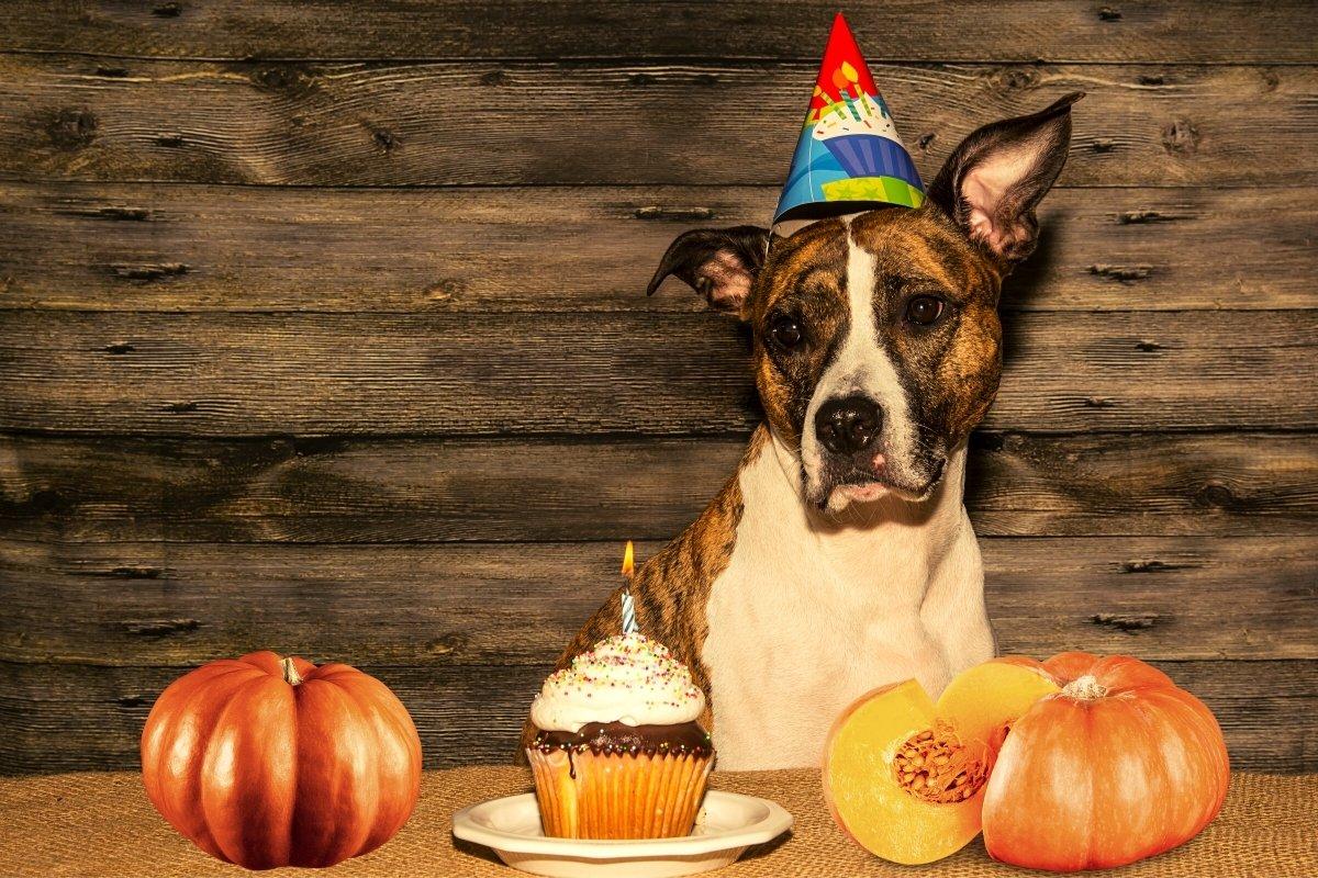 Pumpkin Dog Cake Recipe