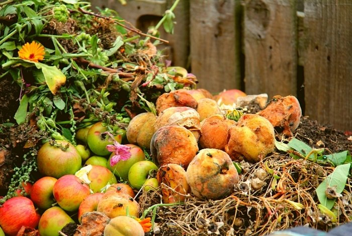 Compost Old Apples - Mushy Apples